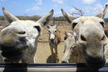 Hungry Donkey's