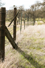 Old Barbed Wire Fence Ranch