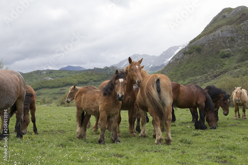 Deurstickers Ezel Group of wild horses
