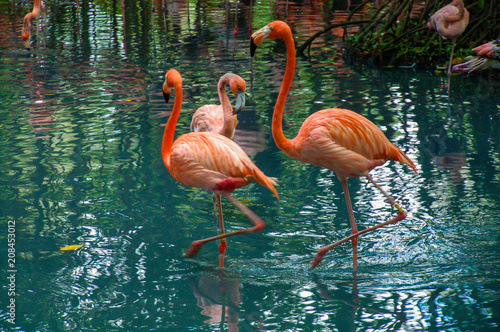 The Three Flamingos Canvas-taulu