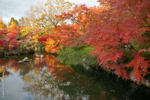 Foto op Canvas Bomen 京都 永観堂の紅葉