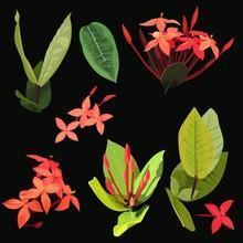 Ixora Tropical Flowers Clip Ar...
