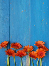 Orange Daisies On A Blue Woode...