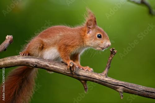 Staande foto Eekhoorn Eichhörnchen