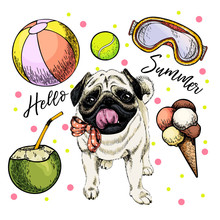 Vector Portrait Of Pug Dog. Hello Summer Cartoon Illustration. Coconut Cocktail, Balls, Ice Cream. Hand Drawn Pet Portait. Poster, T-shirt Print, Holiday Celebration, Postcard, Summertime.