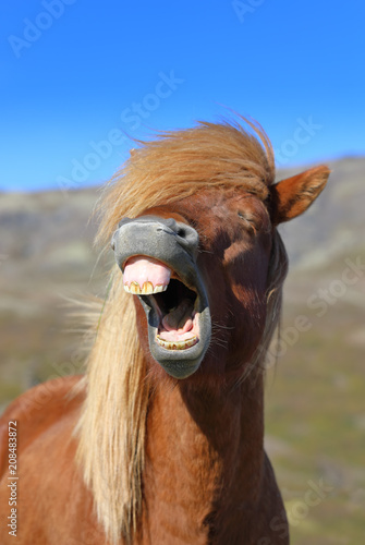Portrait of a laughing horse Fototapet