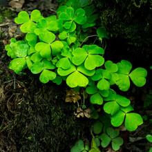 Small Vibrant Colorful Green P...