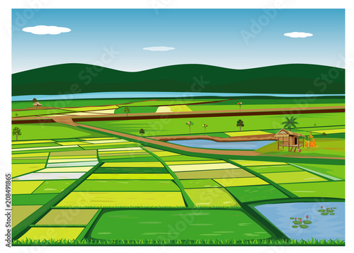 Fototapeta large paddy field vector design