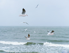 A Cloudy Day At Sea. Seagulls Fly Over The Water. Inclement Windy Weather.