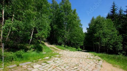 Fotobehang Weg in bos Brukowana droga prowadząca przez las w Karkonoszach, polskich górach - paśmie Sudetów