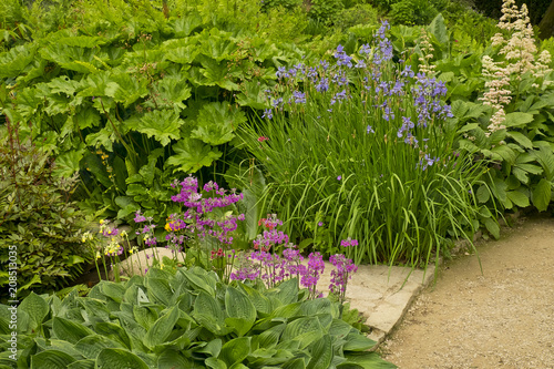 Staande foto Tuin Purple Irises, pink primulas and hostas Hidcote Manor Garden, Chipping Campden, Gloucestershire. United Kingdom