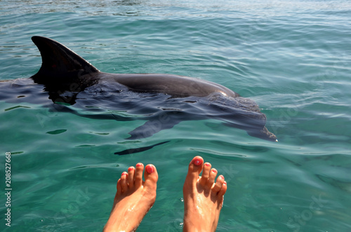 In de dag Dolfijn Female feet in the water against the background of a free dolphin floating in the sea, the Red Sea coast. A sunny day and clear water, A dolphin reef to Israel, watching dolphins..