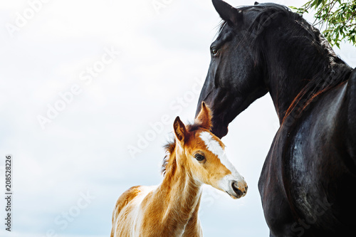 Valokuva Cute foal with his mother