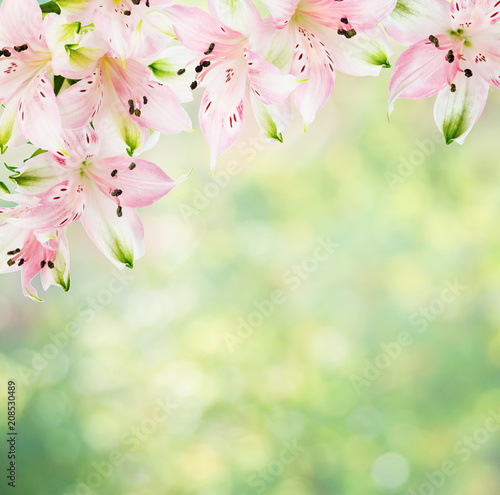 Frame of pink alstroemeria flowers on natural background