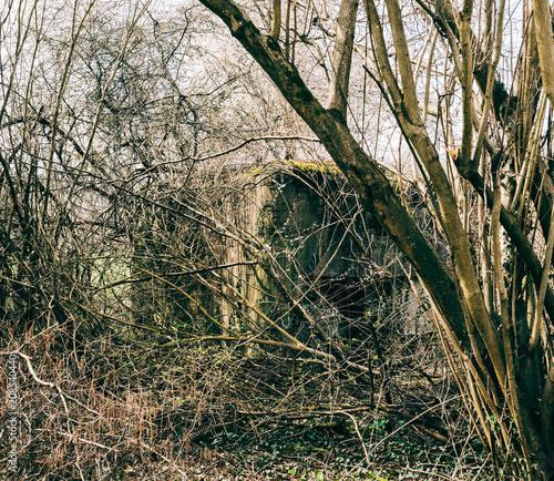Photo  WWII World War bunker hidden behind tree in French forest in Alsace Region not t