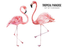 Watercolor Tropical Bird Illustration - Two Isolated Flamingos For Wedding Stationary, Greetings, Wallpapers, Fashion, Backgrounds, Textures, DIY, Wrappers, Postcards, Logo, Etc.