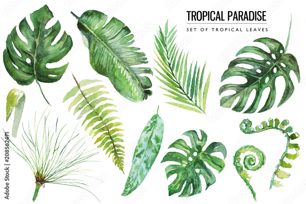 Fototapeta Watercolor tropical floral illustration set with green leaves for wedding stationary, greetings, wallpapers, fashion, backgrounds, textures, DIY, wrappers, postcards, logo, etc.
