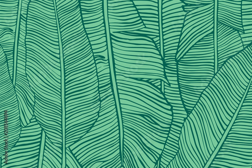 Türaufkleber Künstlich Vector texture with banana leaves. Hand drawn tropical foliage. Exotic green background.