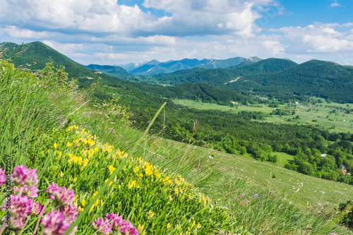 Foto op Canvas Pistache Beautiful landscape view over a meadow full with flowers on green forested hills and peaks of Velebit mountain range on a beautiful sunny day with white clouds. Summer in Croatia or travel concept