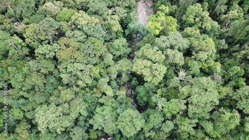 Cadres-photo bureau Olive Rainforest and river aerial photo