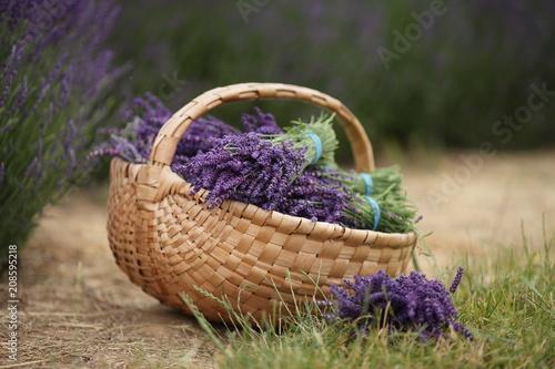 Lawenda w koszyku - 208595218