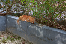 Cute Lazy Red Cat Laying On Gr...