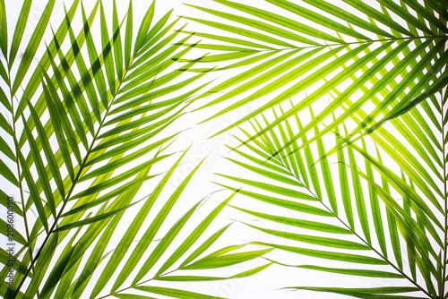Keuken foto achterwand Tropische bladeren Real palm leaves/Green tropical on white background. backlit flat lay .