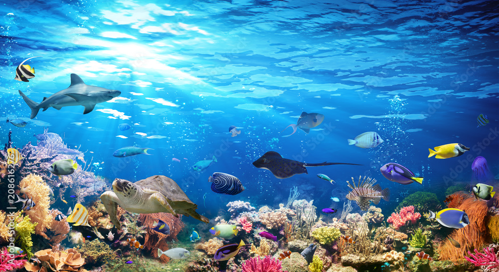 Fototapety, obrazy: Underwater Scene With Coral Reef And Exotic Fishes