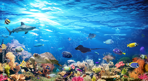 Poster de jardin Recifs coralliens Underwater Scene With Coral Reef And Exotic Fishes
