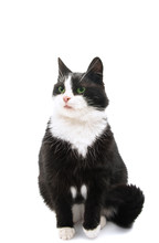 Black And White Cat Isolated