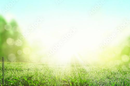 Papiers peints Pres, Marais Gras im Frühling
