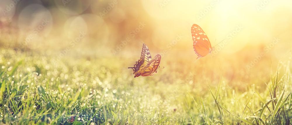 Fototapeta Wunderschöne Schmetterlinge