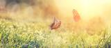 Fototapeta Kwiaty - Wunderschöne Schmetterlinge