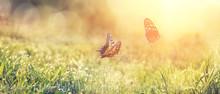Wunderschöne Schmetterlinge