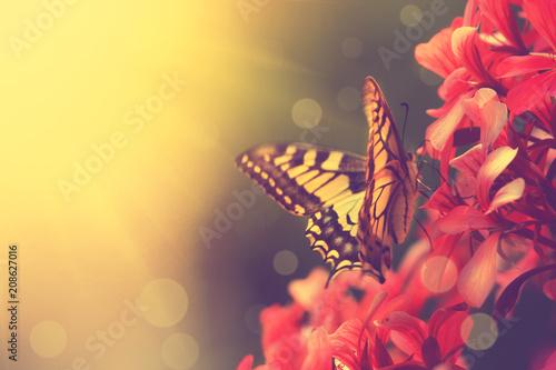 obraz PCV Wunderschöner Schmetterling