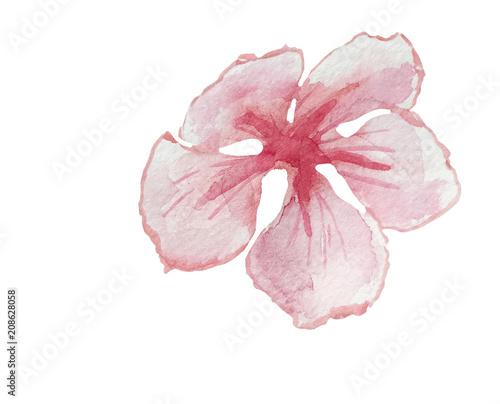 Plissee mit Motiv - cherry flower watercolor illustration isolated (von Anna)