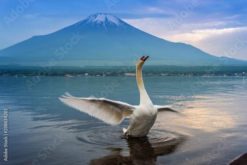 Foto op Plexiglas Zwaan Swan swimming in Yamanaka lake, Japan