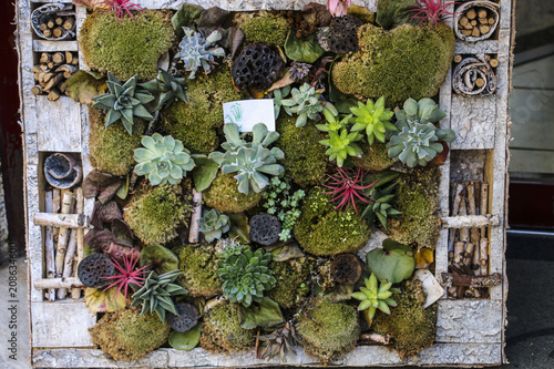Vertical garden with different succulent plants in a wooden planter box with decorative dry sticks