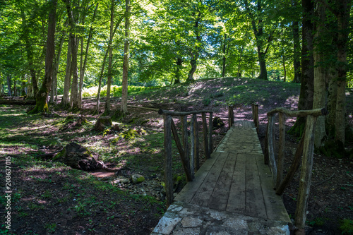 Tuinposter Weg in bos Zeda-gordi, Georgia. View Of Paved Forest Path and wooden bridge Leading To Canyon Okatse