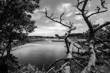 Lake And Dead Tree