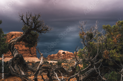 Fotobehang Diepbruine Scenic view of dry desert with green bushes under cloudy sky