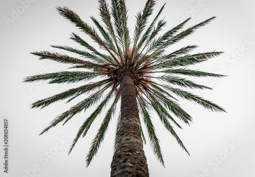 Spoed Foto op Canvas Palm boom Palm tree, low angle