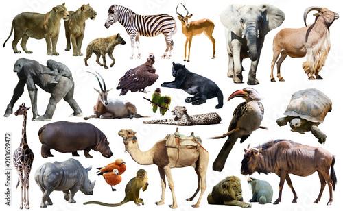 Fényképezés  Birds, mammal and other animals of Africa isolated