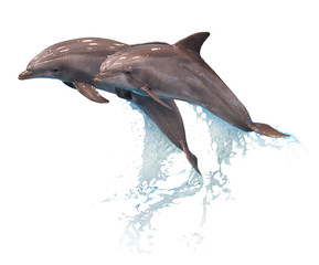 FototapetaGrey dolphins isolated