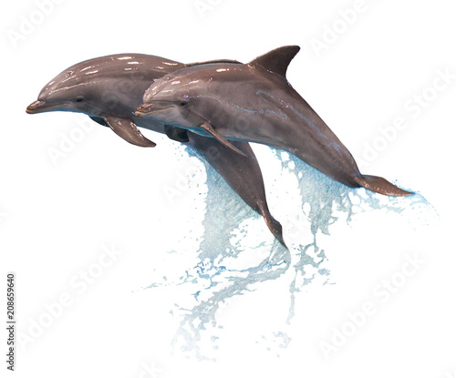 Photo sur Aluminium Dauphin Grey dolphins isolated