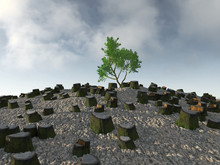 Lone Tree Among The Stumps
