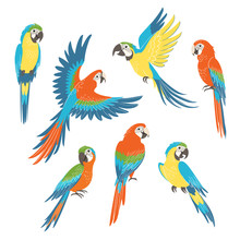 Set Of Colorful Macaw Parrots ...