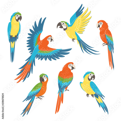 Photo Set of colorful macaw parrots isolated on white background