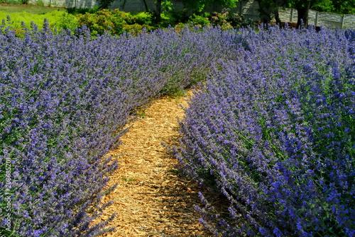 Ścieżka w ogrodzie - 208685201