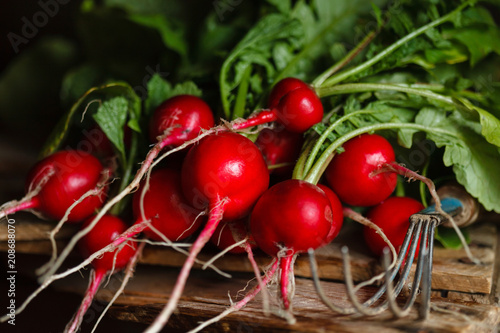 young radishes with leaves